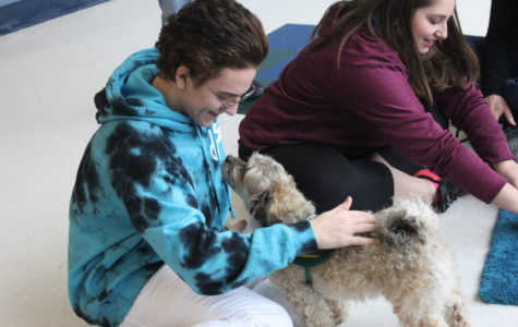Therapy dogs come to MHS to relieve student stress