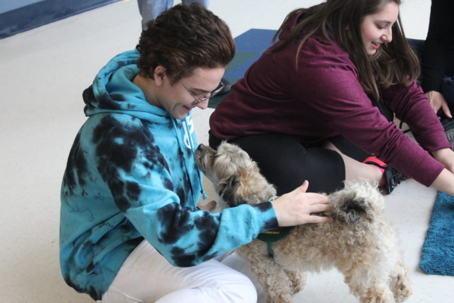 Milo+Laux%2C+senior%2C+pets+Buddy%2C+a+therapy+dog.+Therapy+dogs+visited+MHS+to+help+students+relieve+stress+before+finals+week.+